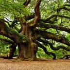 The universe sprouted like an oak tree